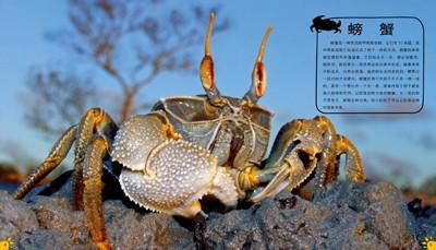 壁纸 动物 甲壳类 昆虫 桌面 400_229