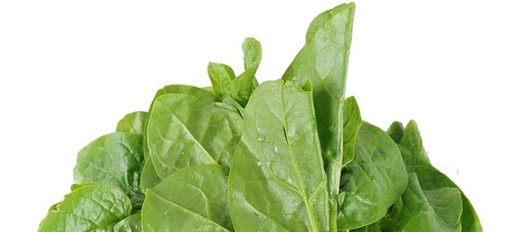 食全食美食全食美有机叶菜类规格图片